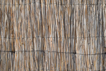The wall of the reed stalks