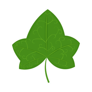 Green ivy leaf vector illustration isolated on white background