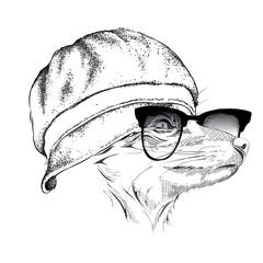 Portrait of fox in cap. Vector illustration.