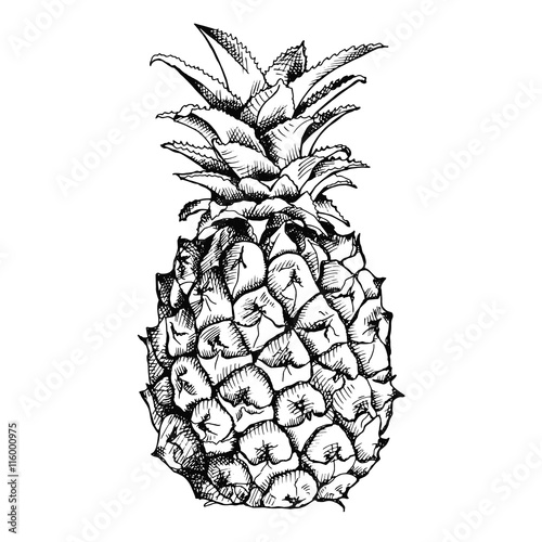 """Image of pineapple fruit. Vector black and white ..."