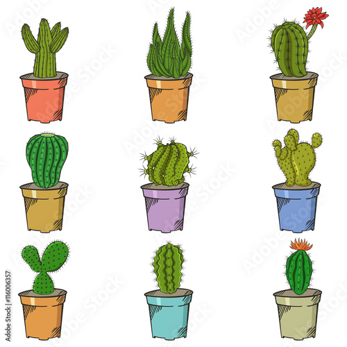 different types of cactus stock image and royalty free vector files on pic 116006357. Black Bedroom Furniture Sets. Home Design Ideas