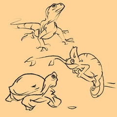 animal amphibian reptiles