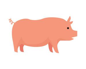 Pig Flat Design Vector Illustration on White.