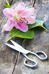 natural flower with scissors on wood