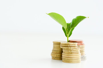 Obraz Profitable investment of money concept with isolated plant and coins   - fototapety do salonu