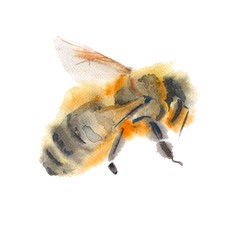 flying bee. isolated on white background. watercolor illustratio