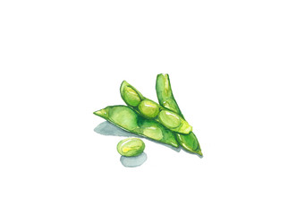 Green Soybean, watercolor painting isolated on white background