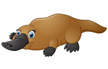 Happy platypus isolated on white background