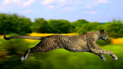 The image of a gepard