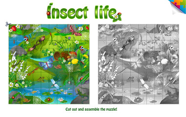life of insects on forest clearing.