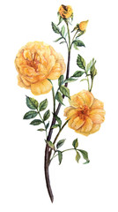 pretty botanical yellow watercolor roses with leaves