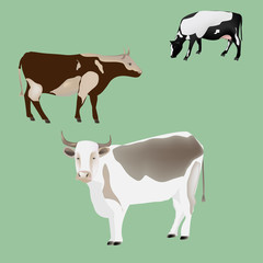 three cows of different colors