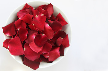Red Rose Petals with space for text