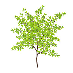 Detailed vector tree with green leaves. Leaves made using mesh tool.