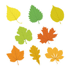 Set of vector isolated multicolor single leaves with veins in flat style