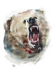 Watercolor drawing of angry looking bear. Animal portrait on white background.