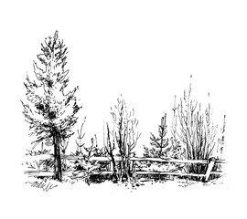 Trees sketch. Isolated on white. Vector illustration.