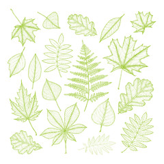 big set of green leaves of various trees. Hand drawing. Vector