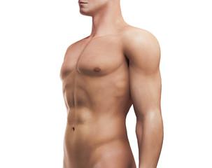 Torace di uomo muscoloso fitness