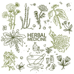 Herbal medicine doodle hand drawn elements sketch