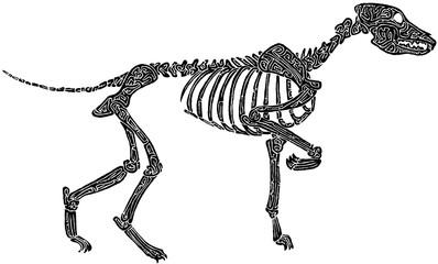 Hundeskelett