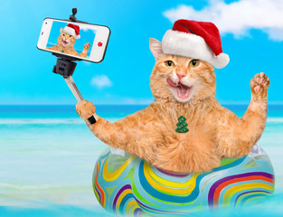 Cat in red Christmas hat relaxing on air mattress in the sea taking a selfie together with a smartphone.