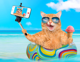 Cat wearing sunglasses relaxing  on air mattress in the sea taking a selfie together with a smartphone.