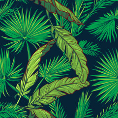 Banana and palm tree leaves on dark blue background