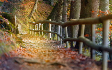 Beautiful autumn scene invites to walk on a misty footpath in the forest.