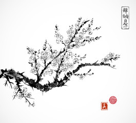 Oriental cherry branch in blossom on white background. Sakura hand drawn in Traditional Japanese ink painting sumi-e.
