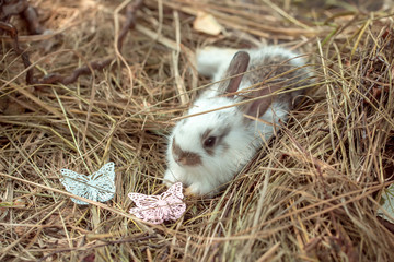 Cute rabbit and butterfly pins