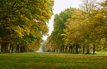 A long tree lined avenue in Autumn