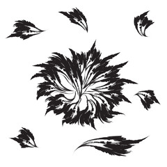 isolated black flower and petals on a white background abstract vector illustration