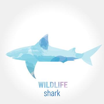 Wildlife banner - fish shark