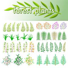 Set forest plants. Design elements. Vector illustration