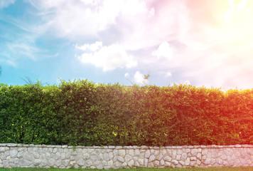 brick wall and ornamental shrub with burst light