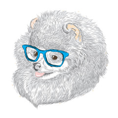Pedigree dogs are drawn by hand. Spitz . Puppy in glasses . Vector illustration for greeting card, poster, or print on clothes.