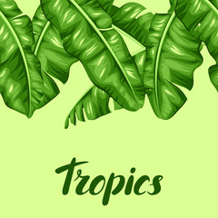 Seamless border with banana leaves. Image of decorative tropical foliage