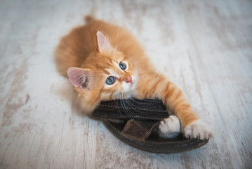 Little red kitten playing with a slipper