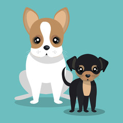 couple breed dogs isolated icon design, vector illustration  graphic