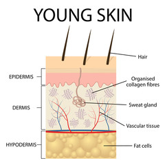 Visual representation of young skin.