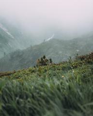 Straße Schweiz Berge Nebel