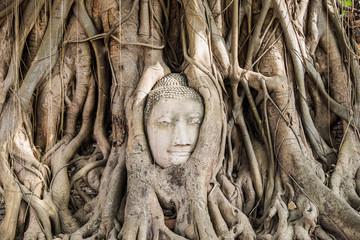 Buddha head statue inside the bodhi tree