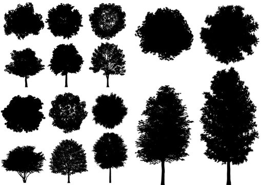 Vector deciduous tree isolated on a white background.