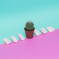 Small cactus and Marshmallow in fresh look.