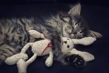 Schlafendes Kätzchen mit Kuscheltier