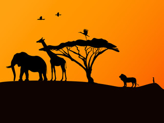 African sunset and animals