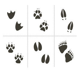 Traces of animals vector illustration. Animals footprints