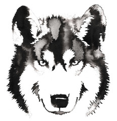 black and white monochrome painting with water and ink draw wolf illustration