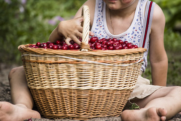 Boy with a basket of cherries in the garden